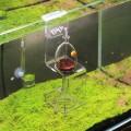 Кормушка VIV Hanging Glass Feeder